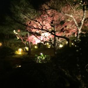 木のライトアップ